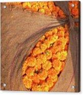 Marigolds I Acrylic Print
