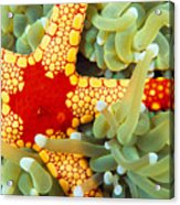 Marine Life, Close-up Acrylic Print