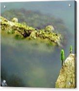 Marine Life On Exposed Concrete Debris Acrylic Print