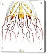 Marine Mollusc Divulging Fish Acrylic Print
