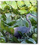 Marlboro Blue Acrylic Print