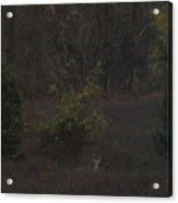 Marlboro Fall Acrylic Print