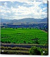 Marlborough Wine Country Acrylic Print