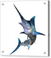 Marlin Profile Acrylic Print