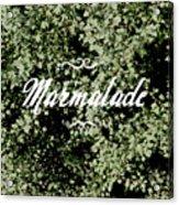 Marmalade Acrylic Print