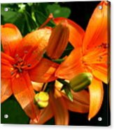 Marmalade Lilies Acrylic Print by David Dunham
