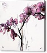 Marning Orchids Acrylic Print