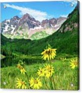 Maroon Sunflowers Acrylic Print