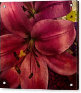 Marsala Lily Acrylic Print