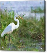 Marsh Egret Acrylic Print