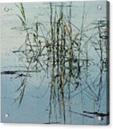 Marsh Grass Acrylic Print
