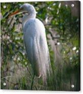 Marsh Heron Acrylic Print