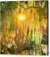 Willow Weep For Me Acrylic Print