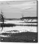 Marsh Skeletons Acrylic Print