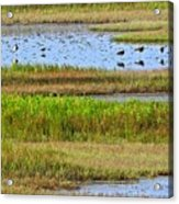 Marsh Tide Pool Acrylic Print