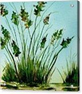 Marsh Weeds Acrylic Print