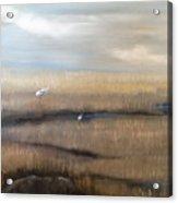 Marsh With Egrets Acrylic Print
