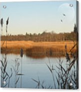 Marshland Acrylic Print by Diana Lee Angstadt