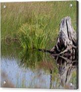 Marshland Reflections II Acrylic Print