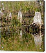 Marshland Reflections Acrylic Print