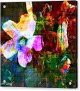 Marshmallow 1 Acrylic Print