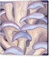 Mary Mushrooms Acrylic Print
