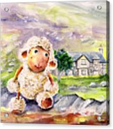 Mary The Scottish Sheep Acrylic Print