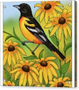 Maryland State Bird Oriole And Daisy Flower Acrylic Print by Crista Forest