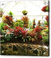 Massed Bromeliad In Hothouse Acrylic Print