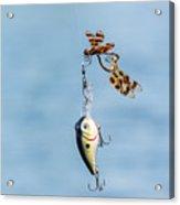 Mating Dragonflies Acrylic Print