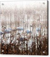 Mattamuskeet Hideaway Acrylic Print