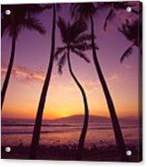 Maui Palms Acrylic Print