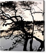 Maui Windy Tree Acrylic Print