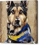Max The Military Dog Acrylic Print