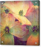 May 10 2010 Acrylic Print