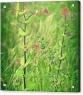 May 13 2010 Acrylic Print