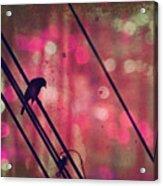 May 14 2010 Acrylic Print