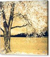 May 5 2010 Acrylic Print