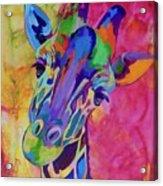 May Acrylic Print