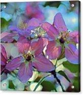 May Pastels Acrylic Print