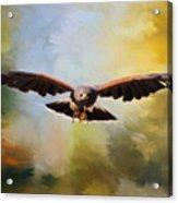 Maybe - Hawk Art Acrylic Print