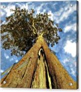 Mayflies On The Eucalyptus Viminalis Acrylic Print