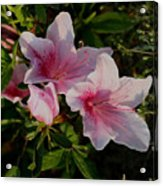 Maymont Flowers Acrylic Print