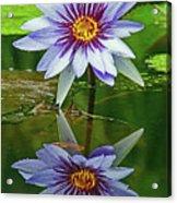Mckee Waterlily II Acrylic Print