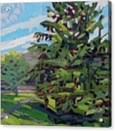 Mcmichael Spruce Acrylic Print