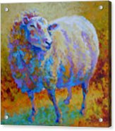 Me Me Me - Sheep Acrylic Print by Marion Rose