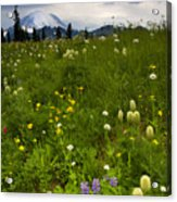 Meadow Beneath The Storm Acrylic Print