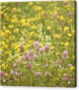 Meadow Dreams... Acrylic Print