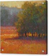 Meadow Glow Acrylic Print