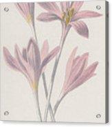 Meadow Saffron Acrylic Print